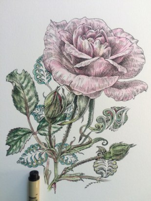 Noel Badges Pugh - rose