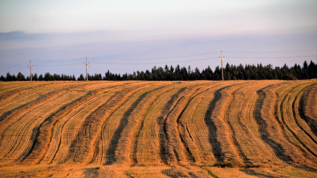 Agriculture et alimentation: ce que la Loi peut… et ce qu'elle ne peut pas