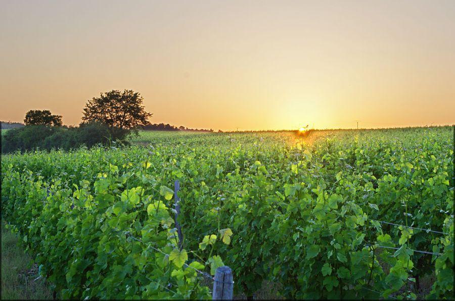 Vale do loire vinhos