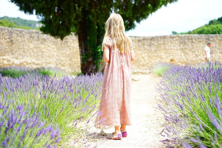 Os melhores destinos turísticos da França para 2019, campos de lavanda
