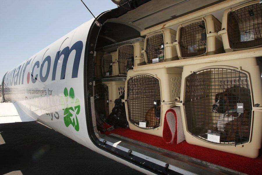 Viajar de avião com animais de estimação, transporte