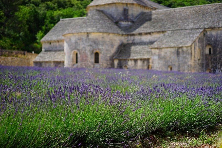 Provença e os campos de lavanda