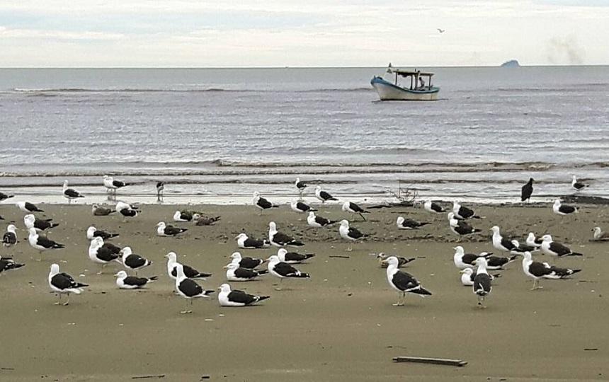 Praia do Costão em Peruíbe Litoral Paulista