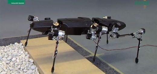 insectorobot - Un robot inspirado en insectos