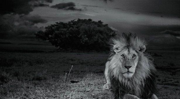 leonserengeti - Leones de Serengeti y robots