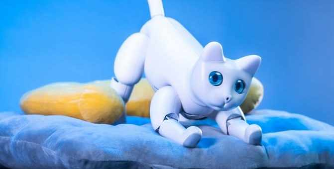 marscat robot gato raspberry pi