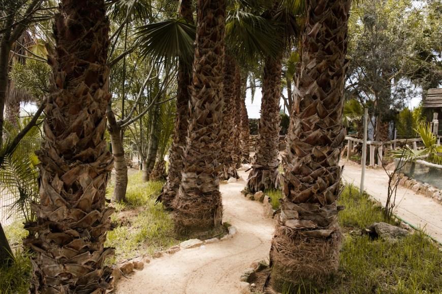Parque tropical Quinta Das Palmeiras en Porto Santo