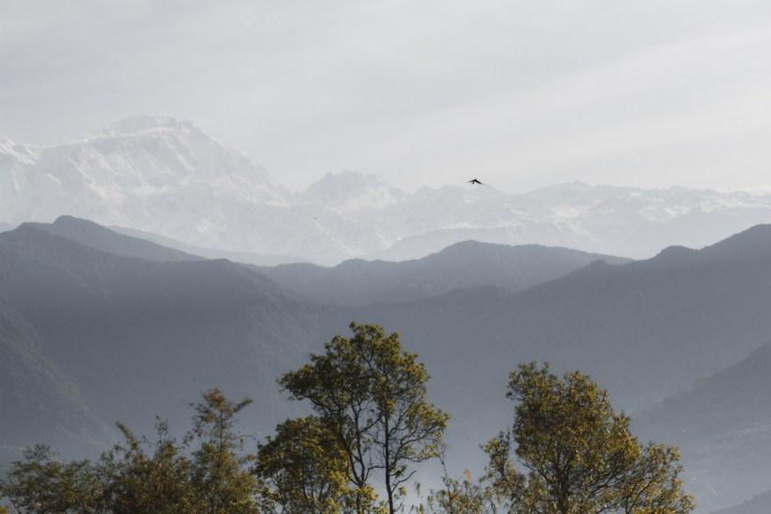 Pájaro volando junto a los himalayas en el Sarangkot, Nepal