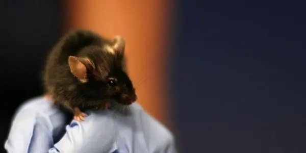 lab-mouse image