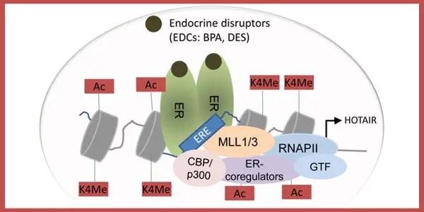 RNA-HOTAIR graphic