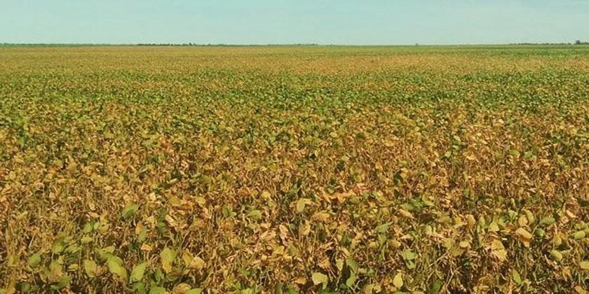 Glyphosate: one pesticide, many problems