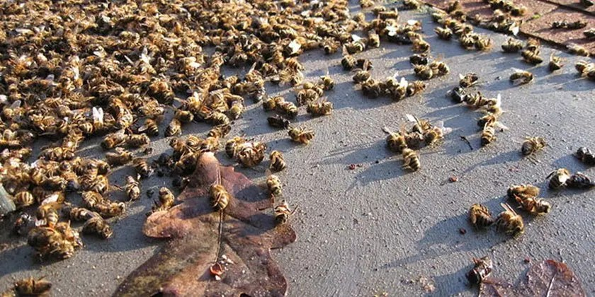 Neonicotinoids chemicals use on crops and losses of wild bee species