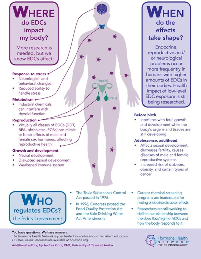 Endocrine Disrupting Chemicals and My Body