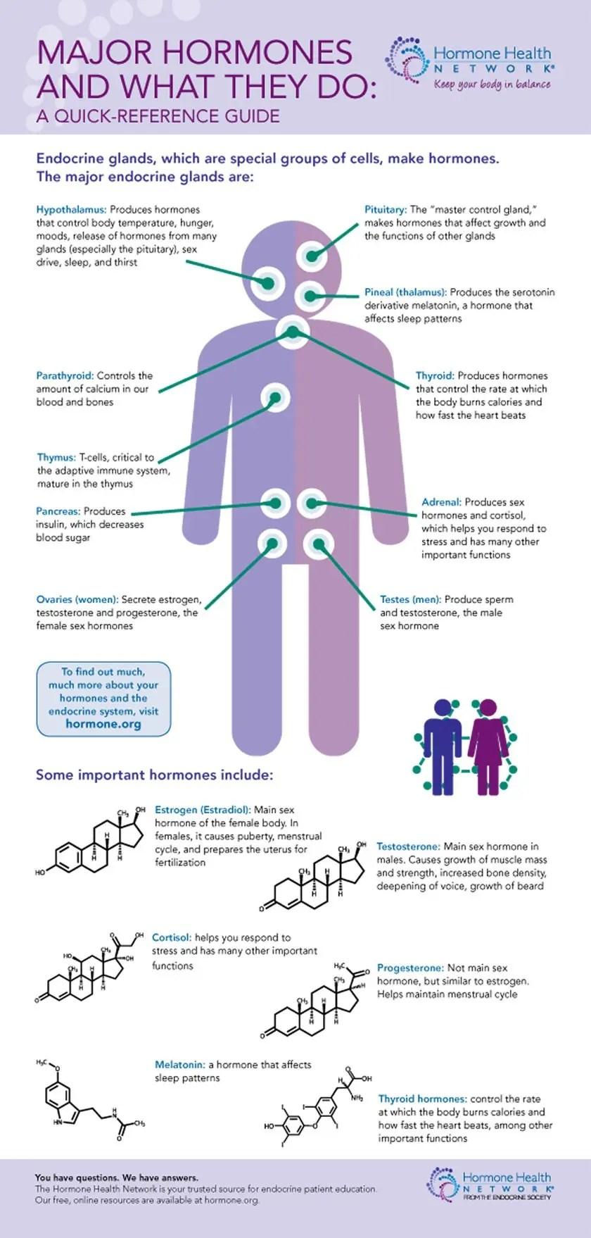 Major Endocrine Glands and Important Hormones
