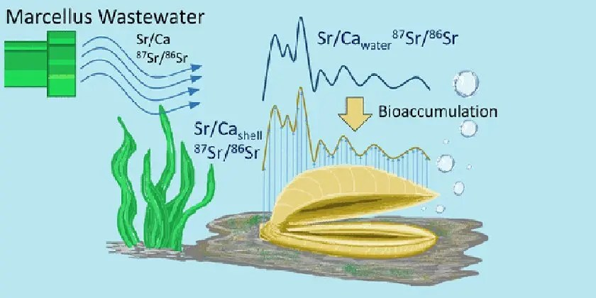 Fracking chemicals entering the food chain