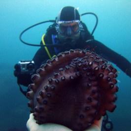 Buceo en el Molino desde dentro (Submarinismo en el Cantábrico)