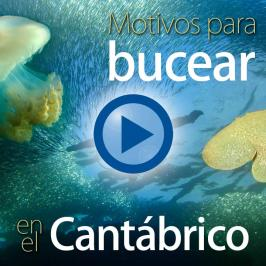 Motivos para bucear en el Cantábrico (versión 2015)