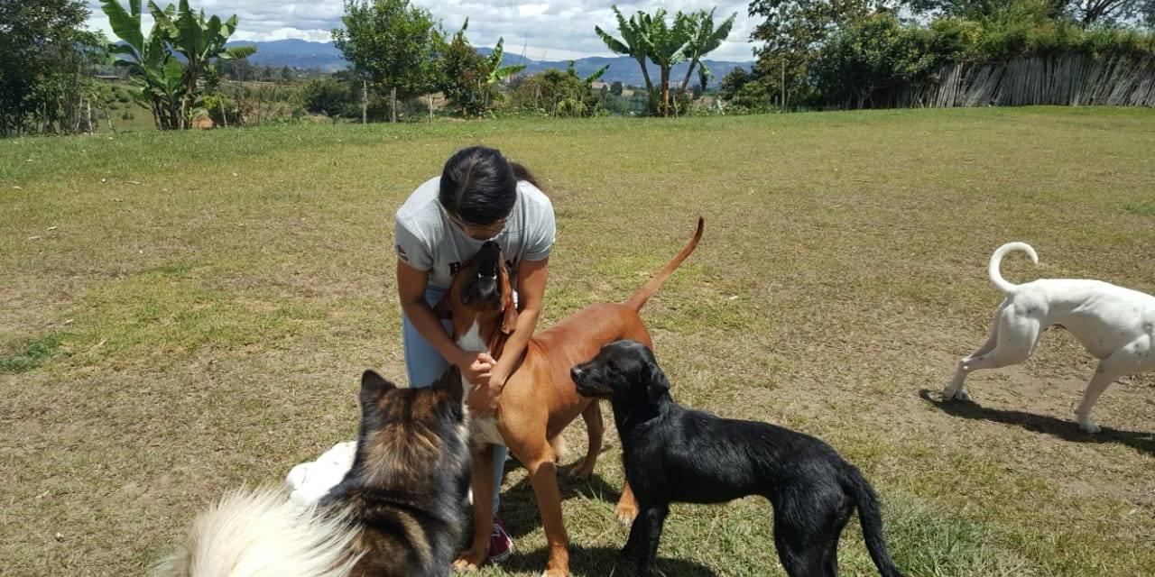 Hotel para perros una forma de cuidar tu mascota en tiempos de ausencia o de vacaciones