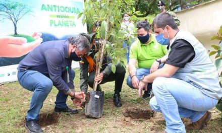 En el Oriente Antioqueño se sembrarán 4 millones de árboles