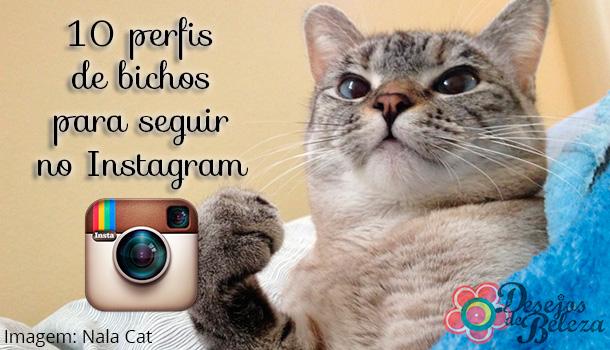 10 perfis de bichos para seguir no Instagram!