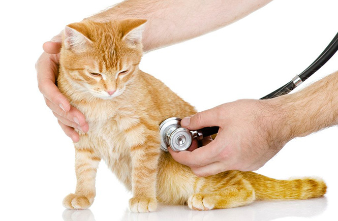 fluidoterapia-em-gatos-2