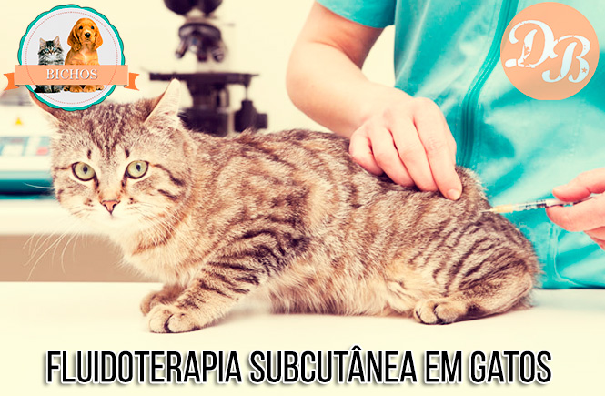 Fluidoterapia subcutânea em gatos – O que é?