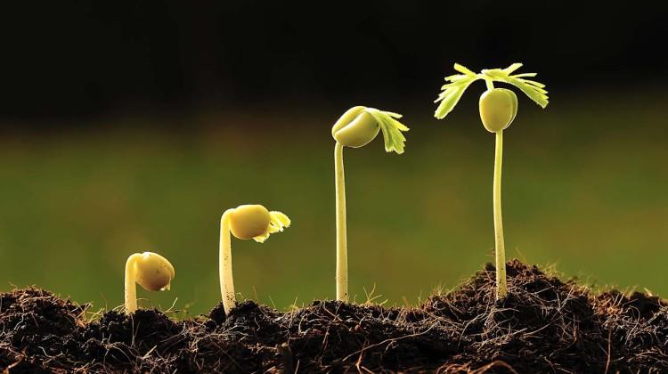 Fertilizantes granulado ou líquido: prós e contras na agricultura