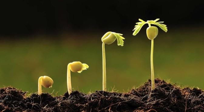 Modificações genéticas deverá ser a especialização do agrônomo