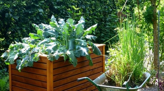 Horta urbana: como cultivar hortaliças em casa e obter seus benefícios