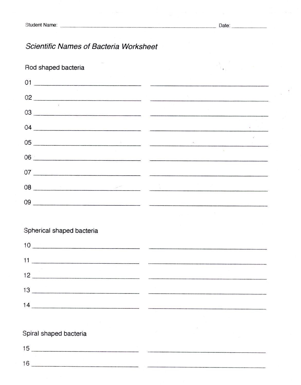 Bacteria Labeling Worksheet