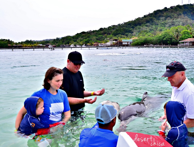 Meeting Dolphin anthony's Key Resort.jpg