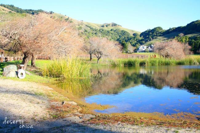 Ewok lake at Skywalker Ranch