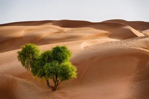 Best Professional Tours in Oman with Desert Flower Tours