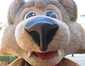 Arizona Coyotes Mascot - Howler