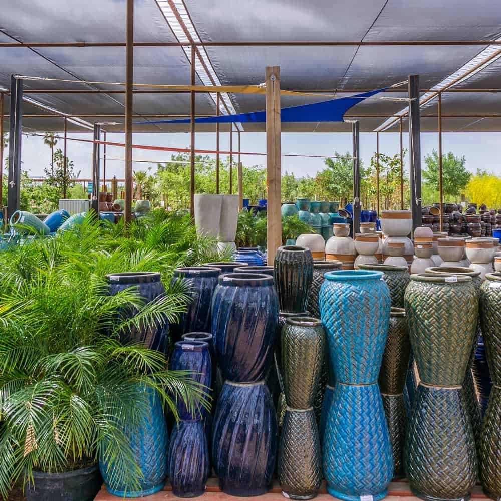 Plants For Sale In The Phoenix Area Desert Horizon Nursery