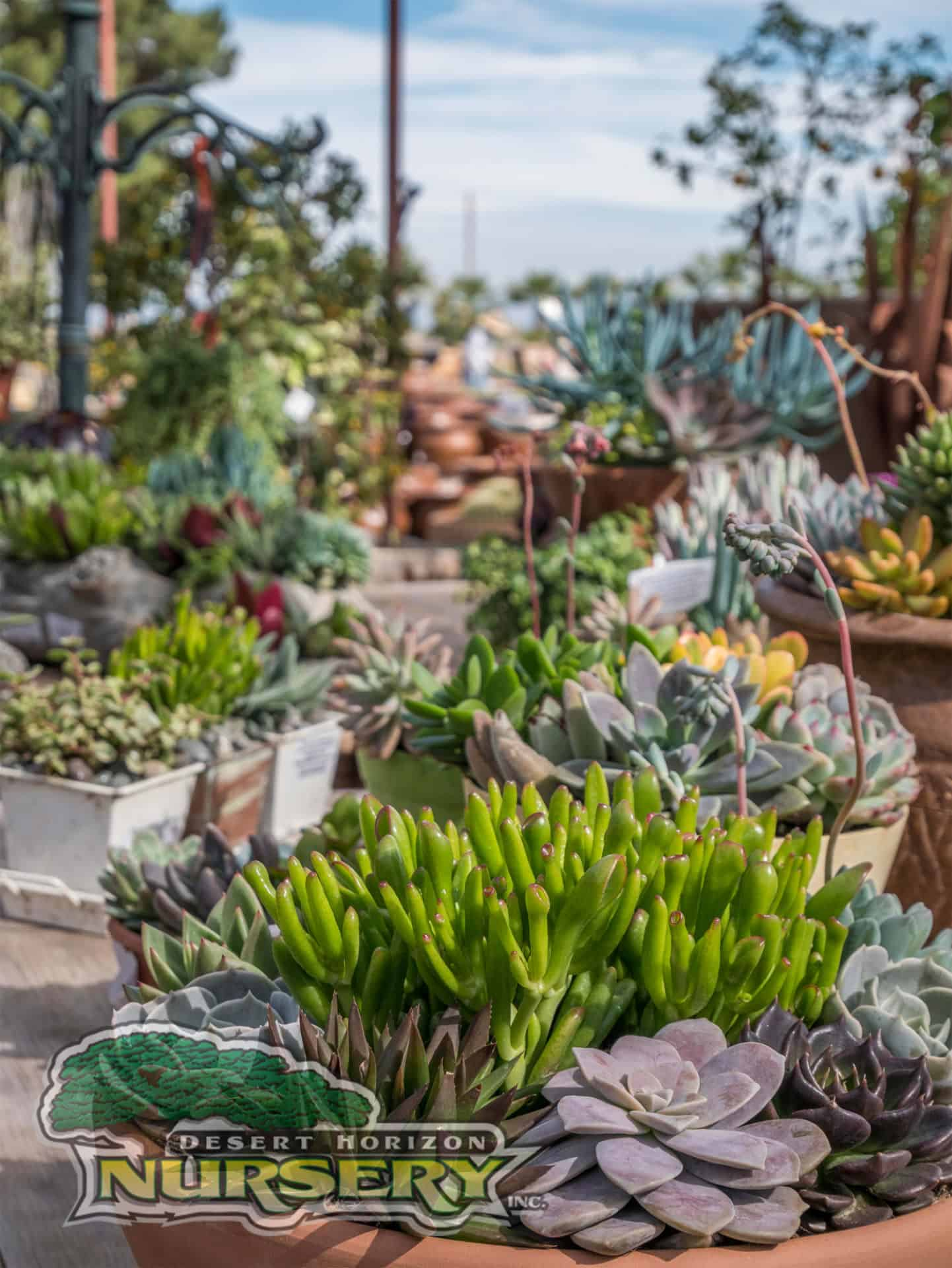 Outdoor Cactus Plants Sale