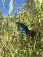 A pair of butterflies in the tall grass.