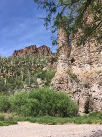 Saguaros nearly down to the level of the creek.