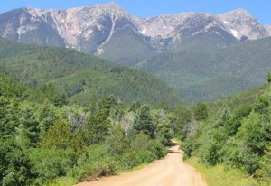 Forest trail in Sangre de Cristo Mountains