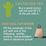 Best Soil For Succulents