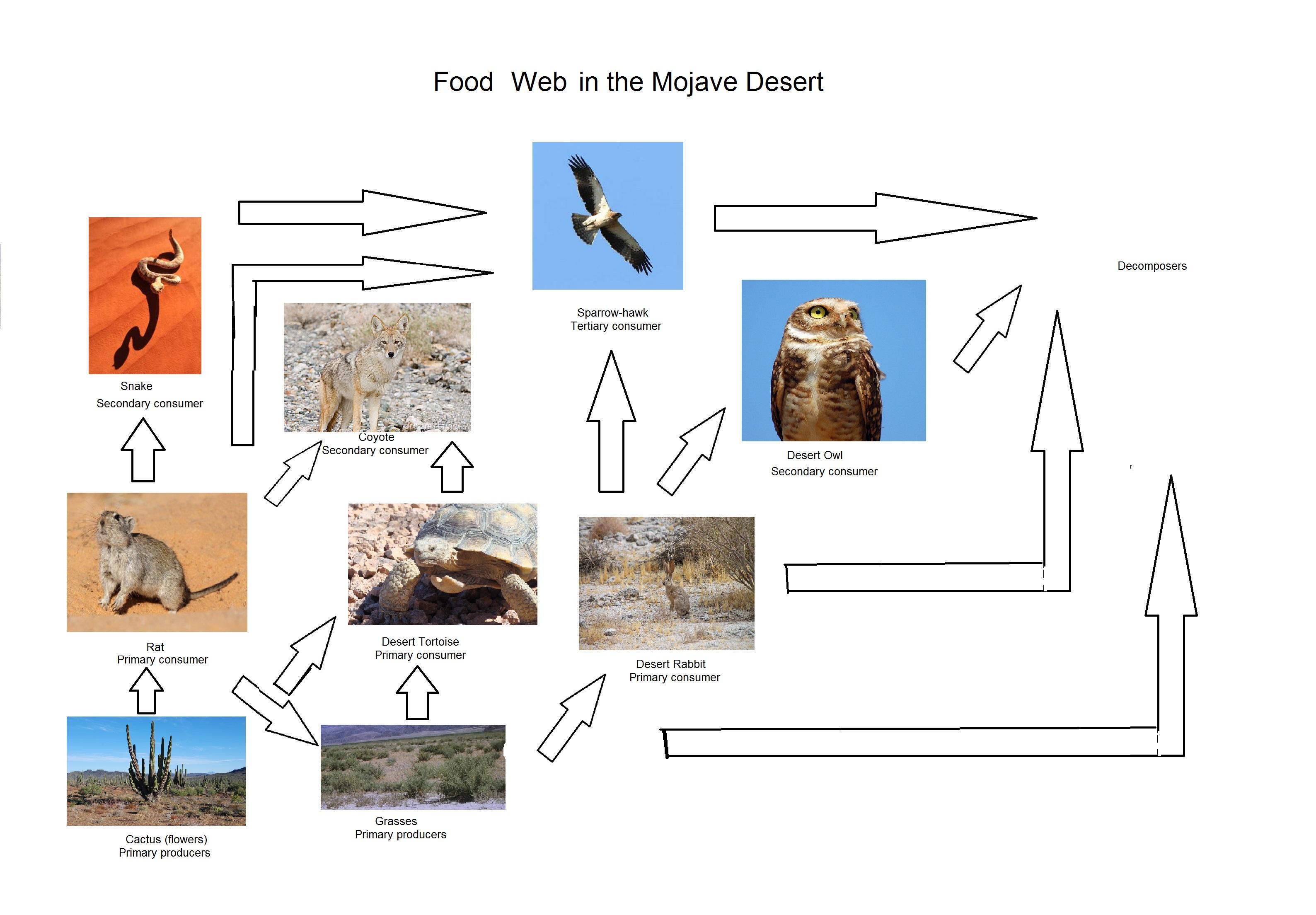 Food Web Of The Mojave Desert