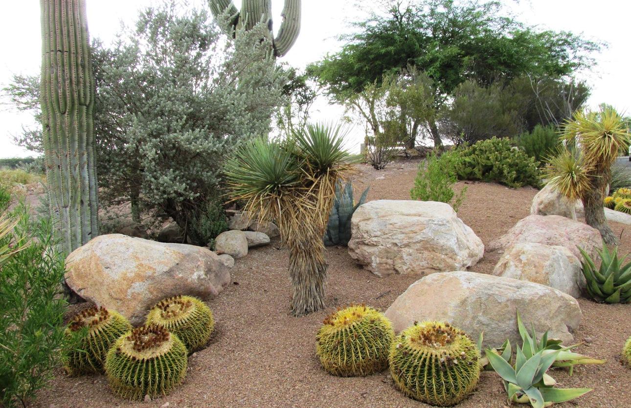 Landscape rock - Arizona Desert Xeriscape on Rocks In Backyard  id=18794