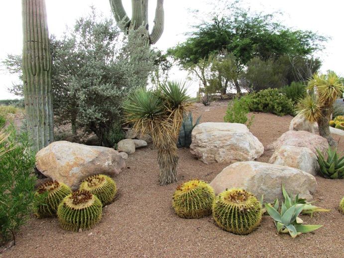 8 Steps to DIY xeriscape landscape design - Arizona Desert ... on Xeriscape Backyard Designs id=33650