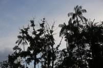 Parc Santander et ses perroquets