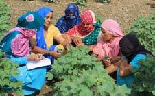 Mahila keet pathshala in Lalit Khera village in Jind
