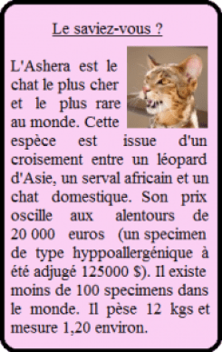 Ashera cout chat entretien cat