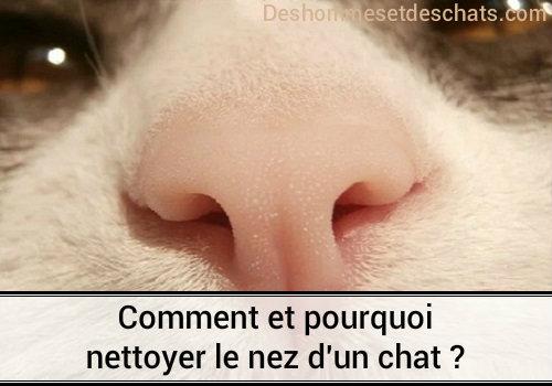 Comment et pourquoi nettoyer le nez du chat ? | Des hommes