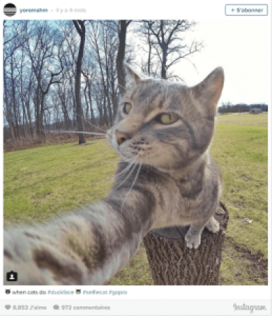 Chat selfie chat marrant chat drôle chat rigolo chaton humour