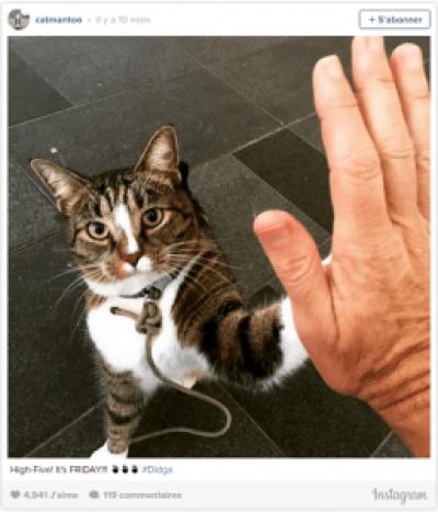 Didga chat skateur tape m'en 5