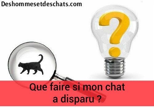 Photo chat photo chaton photo animaux photo de chat images - Chaton marrant ...